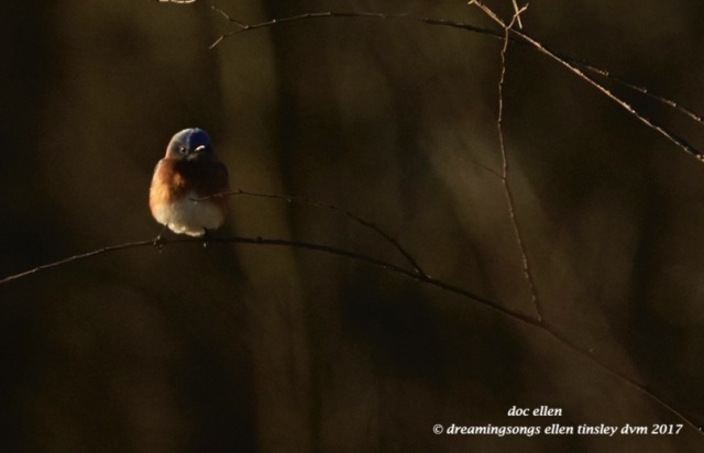 walk0814-02-26-17-08-36-53-jld-bluebird