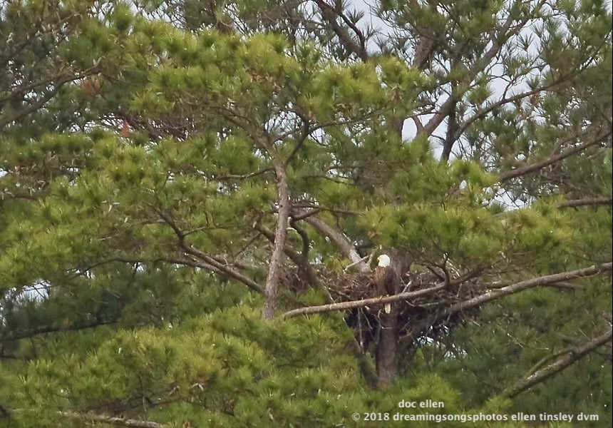 MARK7419 Ebenezer 26-04-18 08-33 1 H&G nest branching